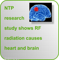 NTP research study shows RF radiation causes heart and brain cancer